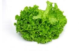 Salade batavia AB (piéce)