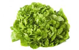 Salade feuille de chêne verte AB (pièce)