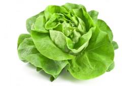 Salade Laitue AB (pièce)