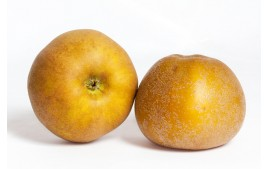 Pomme canada AB (500g)