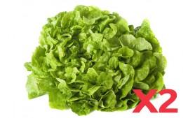 Salade feuille de chêne verte AB (Lot de 2)
