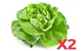 Salade laitue AB (Lot de 2)