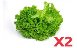 Salade batavia AB (Lot de 2)