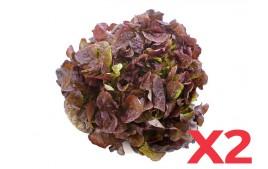 Salade feuille de chêne rouge AB (Lot de 2)