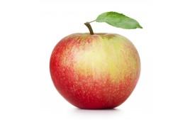 Pomme reine des reinettes biologique